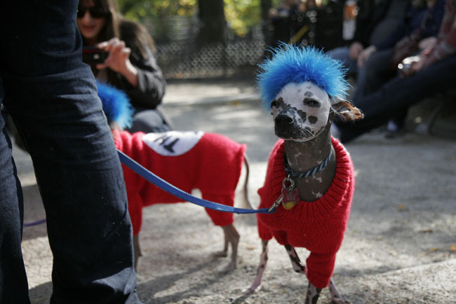 My Favourite Costumes At The Tompkins Square Park Halloween Dog Parade
